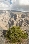 stock photo of jabal  - Bush growing on an edge of a canyon - JPG
