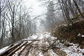 stock photo of sleet  - Snowy path with trees broken by sleet - JPG