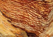 Worm Wood Closeup
