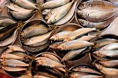 Sardines in metal plates on a fish market