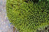 aquatic plant in