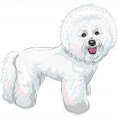 picture of bichon frise dog  - white cute dog Bichon Frise breed smiling - JPG