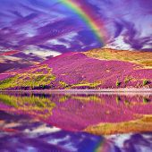 Colorful Landscape Scenery Of Rainbow Over Hill Slope Covered By Purple Heather Flowers And Dramatic