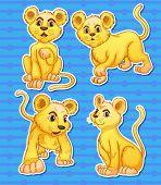 Illustration of lion cubs set