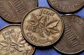 Coins of Canada. Maple leaves depicted in Canadian one cent coin.