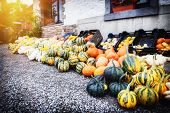 Fresh Colorful Pumpkins For Sale
