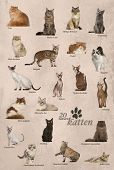 Cat breeds poster in Dutch