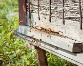 picture of swarm  - Honey bees swarming and flying around their beehive - JPG