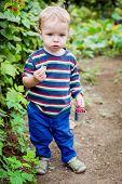 Adorable Toddler Boy Picking Raspberries