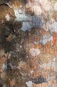 Bark Background Texture Pattern.