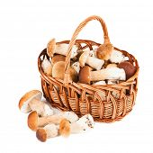 Mushrooms in a basket isolated on white background