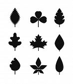 Different leaf silhouettes collection