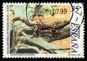 Giant Lizard Of El Hierro