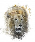 Watercolor Digital Painting Of Lion Head