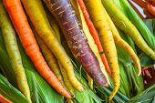 Organic Heirloom Carrots