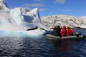 People in Dinghy with leopard seal