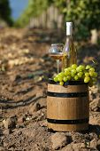 Wooden barrel, grape and bottle of wine on grape plantation background