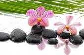 beautiful orchid with wet stones on green palm