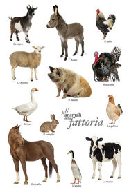 image of herbivore animal  - Educational poster with farm animal in Italian - JPG