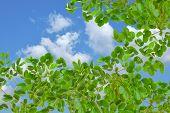 Green Leaf And Beautiful Blue Sky