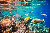 stock photo of aquatic animal  - Reef with a variety of hard and soft corals and tropical fish - JPG