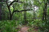picture of suwannee river  - Hiking to Little Shoals on the Suwannee River - JPG