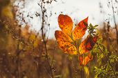 Abstract Foliage Background, Beautiful Tree Branch In Autumnal Forest, Bright Warm Sun Light, Orange