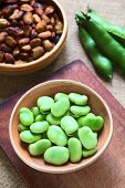 Raw Broad Beans (lat. Vicia Faba)
