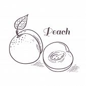 Hand Drawn Outline Peach With Slice