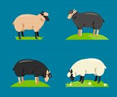 Постер, плакат: Illustration of a cartoon sheep Vector