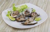 foto of oyster shell  - Fresh oysters in the bowl with ice - JPG
