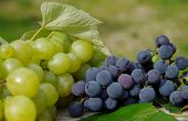 Blue Grapes And Green Grapes