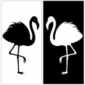 stock photo of pink flamingos  - White and black silhouette of flamingos in vector - JPG