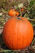 Pumpkin_9230