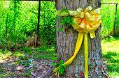 Yellow ribbon around maple tree