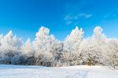 picture of sleet  - beautiful winter forest on a sunny day - JPG