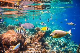 foto of fresh water fish  - Reef with a variety of hard and soft corals and tropical fish - JPG