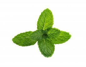 stock photo of peppermint  - Fresh mint on white background leaf - JPG