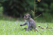 pic of baby-monkey  - Baby monkey - JPG