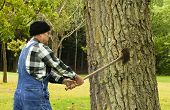 Man Preparing To Chop Down Tree