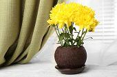 image of chrysanthemum  - Beautiful chrysanthemum in pot on windowsill - JPG