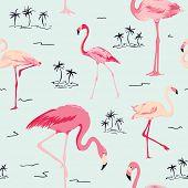 image of flamingo  - Flamingo Bird Background  - JPG