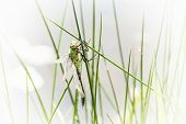 image of insect  - Dragonfly is an insect belonging to the order odonata suborder anisoptera - JPG