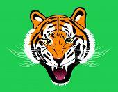 stock photo of tigers-eye  - Tiger anger - JPG