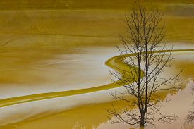 image of polution  - dry tree in poluted water lake red colour - JPG