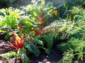 Sun Thru Veggie Greens