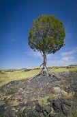 Weathered Tree In Desert