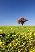 Spring Fields Portrait