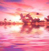 Sunset rosa fantasia