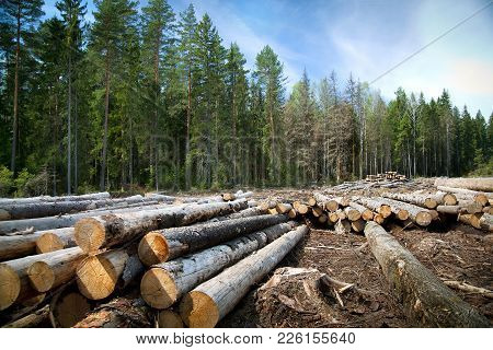 Deforestation In Rural Areas Timber Harvesting Green Coniferous